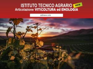articolazione viticoltura ed enologia ITA Cattaneo Marco Polo